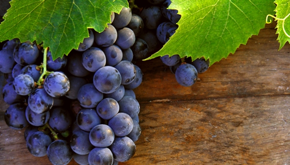 Grow Your Own Grape Vine