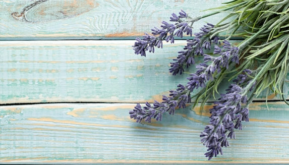 Lavender Plant Gifts
