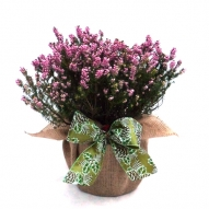 SPRING HEATHER GIFT