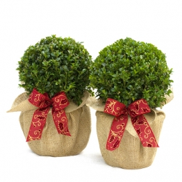 PAIR TOPIARY BOX  BALLS