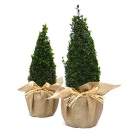 A PAIR OF BUXUS PYRAMIDS