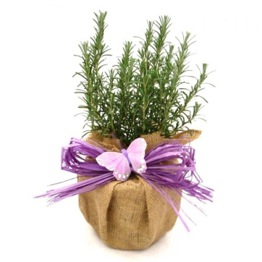AROMATIC ROSEMARY GIFT