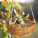 LUXURY HANGING BASKET BIRD FEEDER
