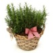 VINTAGE ROSEMARY BASKET